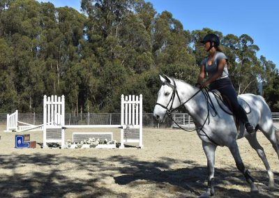 equestrian-center-stables-lessons-training-horses-horse-boarding-juming