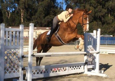 stables-horse-equestrian-center-training-lessons-boarding--jumping